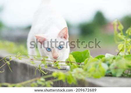 Cat sneaking on the wall. - stock photo