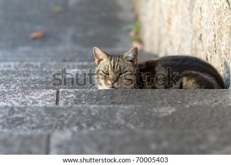 Cat Stairs - stock photo