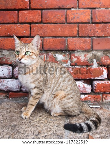 cat standing on stone floor - stock photo
