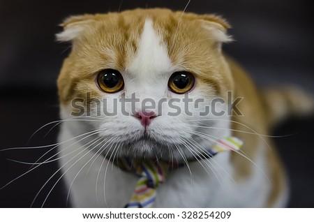 cat stare on me - stock photo