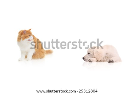 Cat staring at a dog isolated against white background