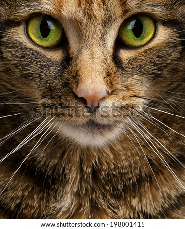 Cat Staring Intensely into the Camera - stock photo