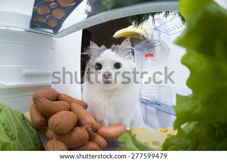 cat steals sausage from the refrigerator - stock photo