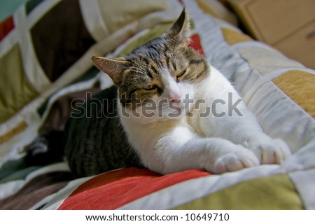 Cat stretching on the bed - stock photo