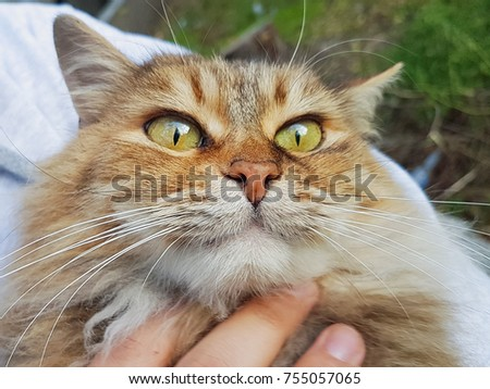 cat stroked by man's hand