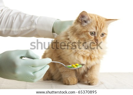 cat tablet - stock photo