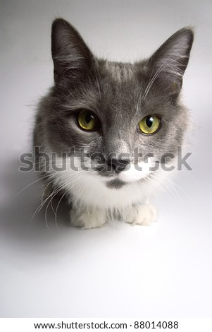 Cat that looks at the camera - stock photo