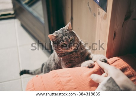 cat that plays with hand of his master