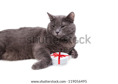 Cat thinking about gifts with white copyspace - stock photo