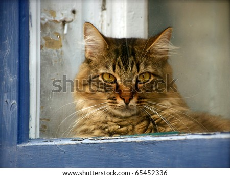 Cat through a blue window frame - stock photo