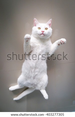 cat tip over Looking for you - stock photo