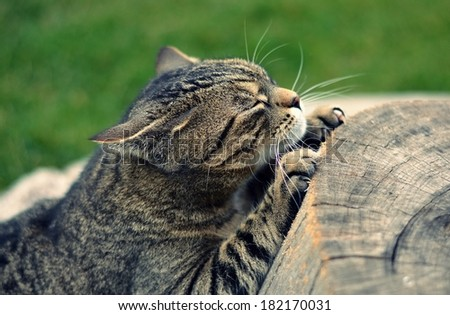 Cat to sharpen claws on the tree trunk - stock photo