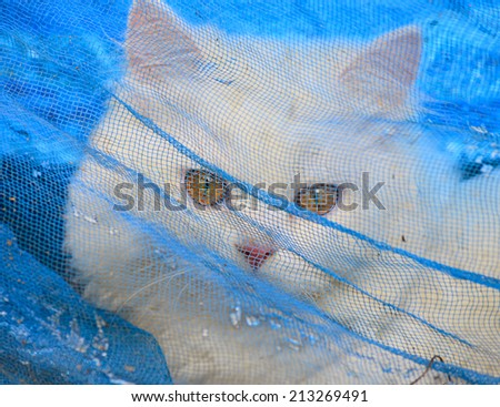 Cat trapped - stock photo