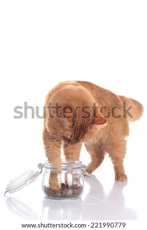 Cat tries to get some goodies - stock photo
