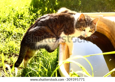 cat try to get to the water in old baby bath - stock photo
