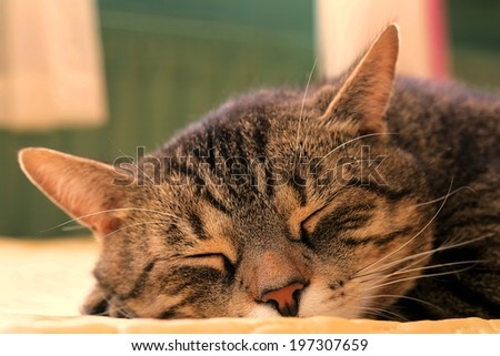 cat try to smell prey trail in the garden - stock photo