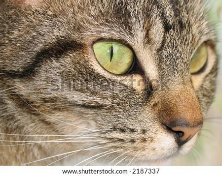 Cat up close - stock photo