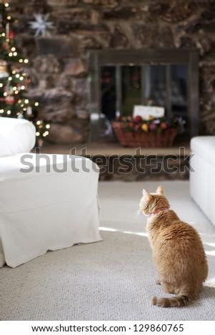 Cat waiting for Santa - stock photo