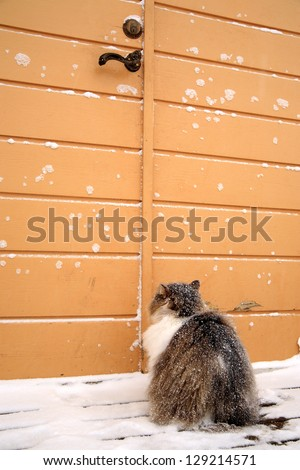 Cat waiting for someone to open the door - stock photo