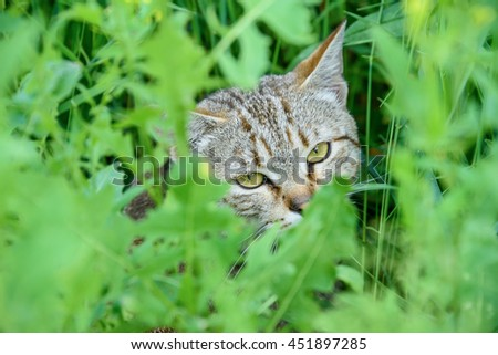 Cat walking around in green bushes