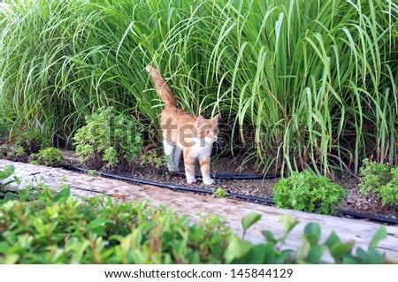 Cat walking in garden - stock photo