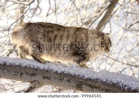 Cat walking on snow covered branch outdoors