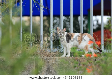 Cat walking on the fence