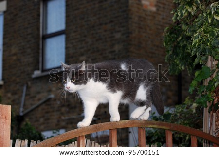 Cat walking on the fence - stock photo