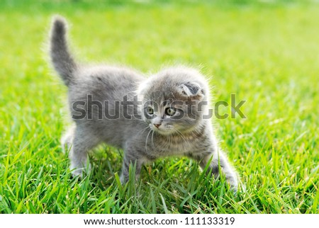 cat walking on the green grass - stock photo