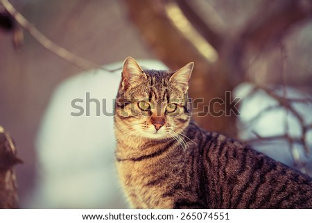 Cat walking outdoors in marsala color - stock photo