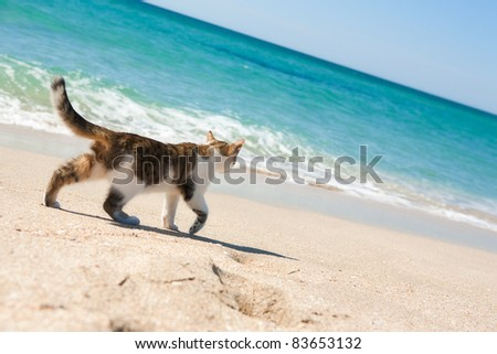 Cat walks on the beach - stock photo
