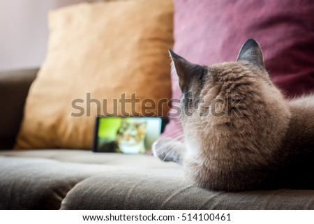 Cat watching cat on smartphone