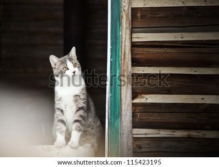 Cat watching outside ! - stock photo