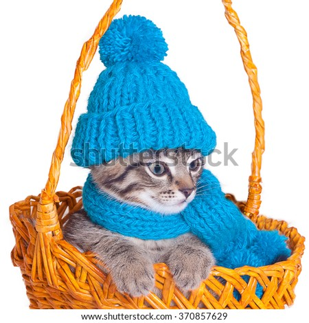 Cat wearing a blue knitting hat with pompom and a scarf.  - stock photo