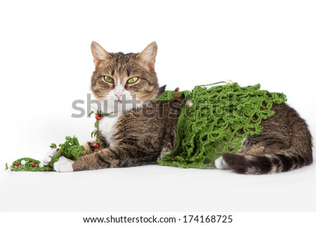 Cat wearing a Christmas tree is isolated on white - stock photo
