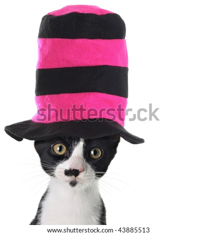 Cat wearing a hat - stock photo