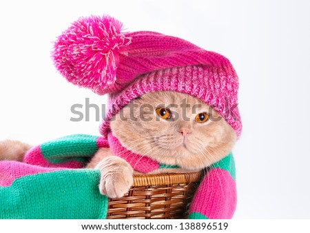 Cat wearing a pink knitting hat with pompom and a scarf lying in a basket - stock photo
