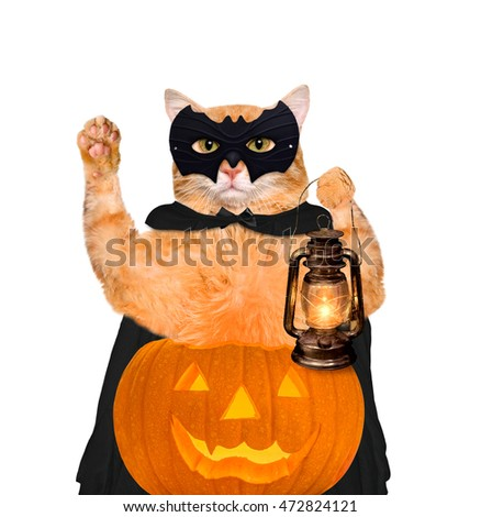 Cat wearing costume for halloween with a pumpkin. Isolated on white background.  sc 1 st  Shutterstock & Cat Wearing Costume Halloween Pumpkin Isolated Stock Photo (Royalty ...