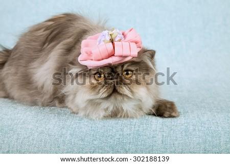 Cat wearing pink fancy hat  - stock photo