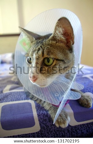 Cat wearing protective medical collar, sitting on bed. - stock photo