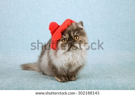 Cat wearing red beret  - stock photo