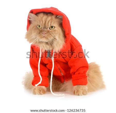 cat wearing red coat isolated on white background - stock photo