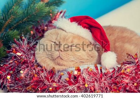 Cat wearing santa hat sleeping in a basket