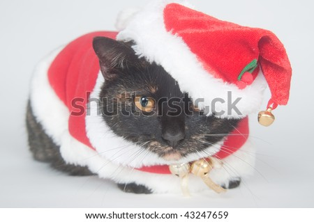 Cat wearing santa suit