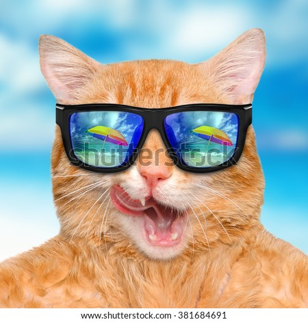 Cat wearing sunglasses relaxing in the sea background - stock photo