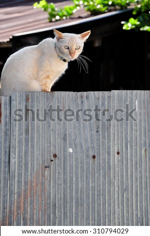 Cat white on zinc - stock photo