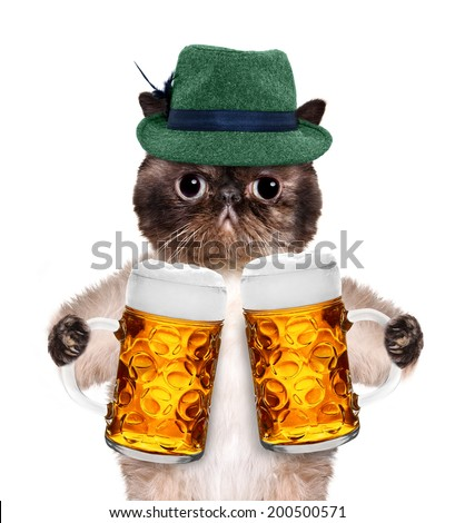 Cat with a beer mug - stock photo