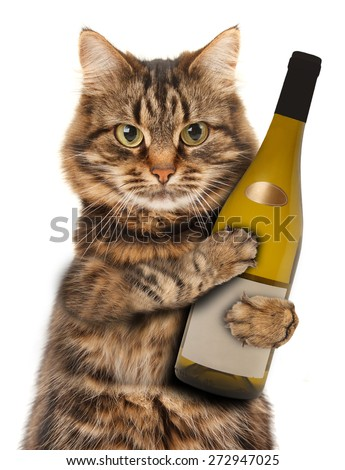 cat with a bottle of wine - stock photo