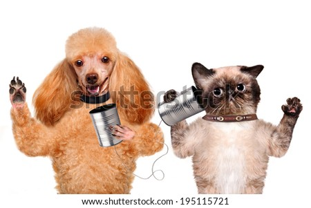 Cat with a dog on the phone with a can