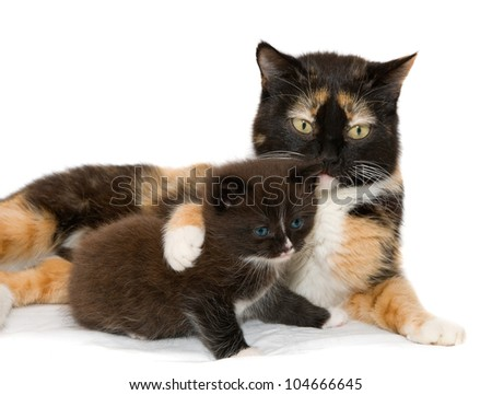 Cat with a kitten on the white background